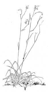 Gândacelul - Illustration von Jon Mincu, Fine-Press-Atelier, Berlin - Künstler, Illustrator, Zeichner, Maler für Kunst, Wissenschaft, Belletristik und Kinderbücher