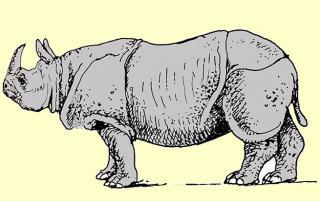Rhinozeros - Illustration von Jon Mincu, Fine-Press-Atelier, Berlin - Künstler, Illustrator, Zeichner, Maler für Kunst, Wissenschaft, Belletristik und Kinderbücher