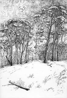 Wald - Kinderbuch-Illustration von Jon Mincu, Fine-Press-Atelier, Berlin - Künstler, Illustrator, Zeichner, Maler für Kunst, Wissenschaft, Belletristik und Kinderbücher